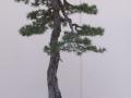 sakka-002-jpg