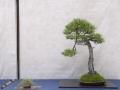 sakka-035-jpg